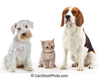 cani domestici, animali, tre, gatto