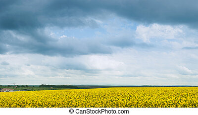 canola, vista panoramica, azzurramento, grigio, tempesta, clouds.