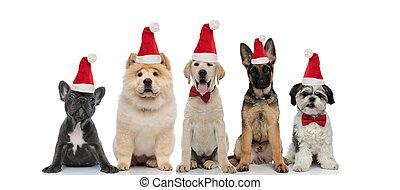 cappello, cinque, natale, santa, gruppo, poco, il portare, claus, cani