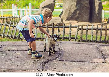 carino, alimentazione, ragazzo, neonato, piccolo, goat