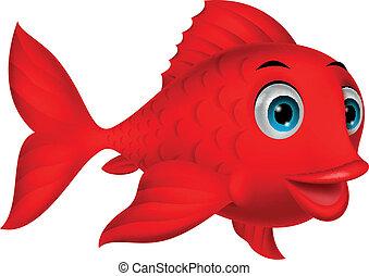 carino, fish, cartone animato, rosso