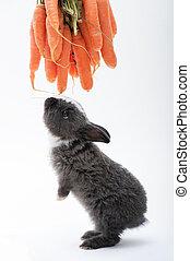 carino, poco, carota, mangiare, coniglio