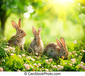 carino, poco, coniglietti, arte, prato, rabbits., disegno, pasqua