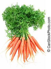 carote bambino