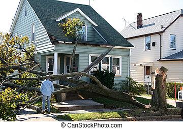 casa, danneggiato, albero