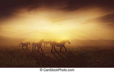 cavalli, crepuscolo