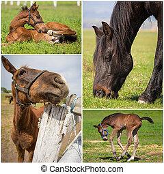 cavalli, immagini, collezione
