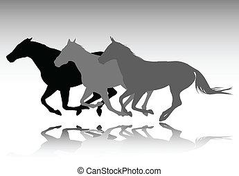 cavalli selvaggi, correndo