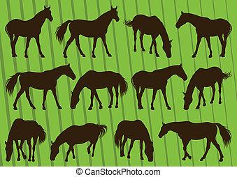 cavallo, illustrazione, silhouette, collezione, fondo, sport