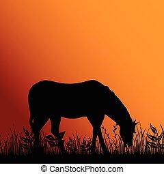 cavallo, mangiare, illustrazione, natura