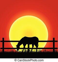 cavallo, silhouette, illustrazione, natura