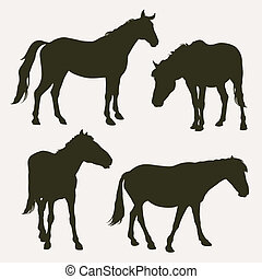 cavallo, silhouette