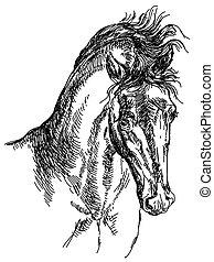 cavallo, testa, illustrazione, mano, vettore, disegno