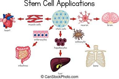 cellula, domande, diagramma, gambo