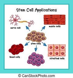 cellula, scientifico, gambo, domande, illustrazione medica