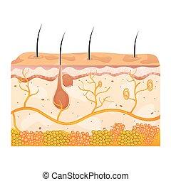 cellule, pelle