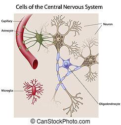 cervello, cellule