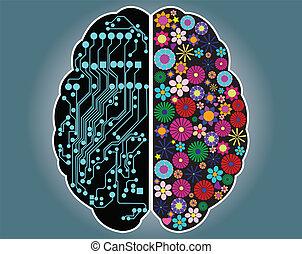 cervello, destra, lato, sinistra