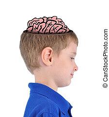 cervello, educazione, far male, ragazzo