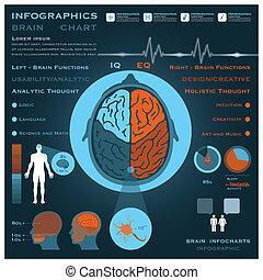 cervello, medico, infographic, salute, infocharts