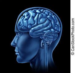 cervello, simbolo, neurologia