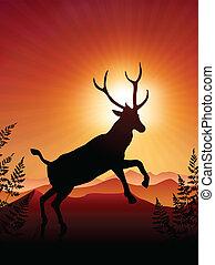 cervo, ib, tramonto, fondo