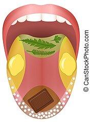 cibo, lingua, sapore, zone, aroma