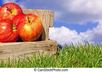 cielo blu, cassa, nuvoloso, mele, erba