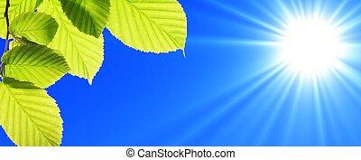 cielo blu, foglia