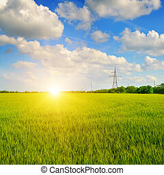 cielo blu, frumento, alba, campo