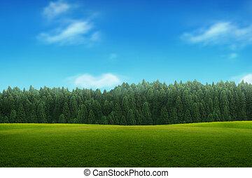 cielo blu, giovane, paesaggio, foresta verde