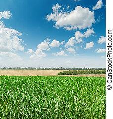 cielo blu, nuvoloso, campo, verde, agricoltura