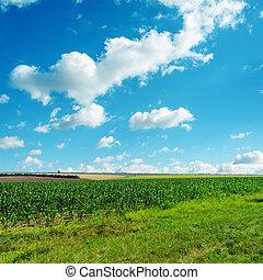 cielo blu, nuvoloso, verde, sotto, erba
