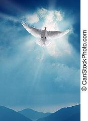 cielo blu, santo, colomba, volare, bianco