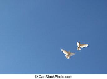 cielo, due, colombe