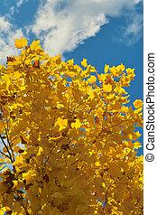 cielo, nubi, foglie