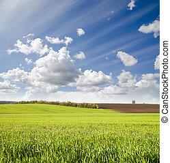 cielo, nuvoloso, campo, verde, sotto, agricolo