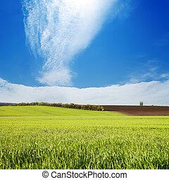 cielo, nuvoloso, campo, verde, sotto, erba