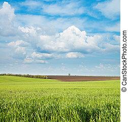 cielo, nuvoloso, campo, verde, sotto, nero