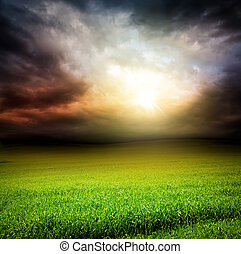 cielo, sole erba, spia verde, scuro, campo