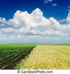 cielo, sopra, agricoltura, nuvoloso, campi
