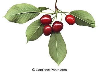 ciliegia, foglie, mazzo