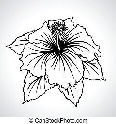 cinese, isolated., macro, nero, rosa, fiori
