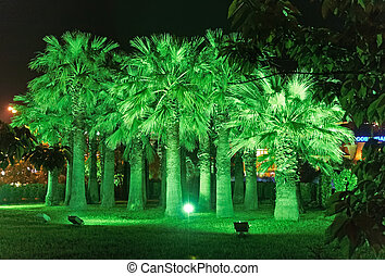 città, riviera, parco, sochi, notte, illuminazione