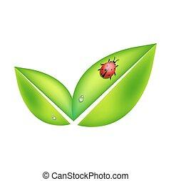 coccinella, foglie, verde, simbolo