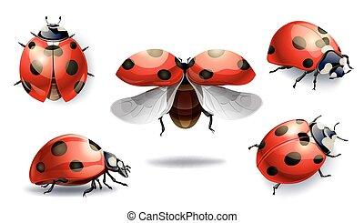 coccinella, set, isolato, illustrazione, vettore, white., rosso