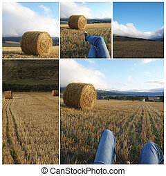 collage, agricoltura