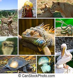 collage, animali