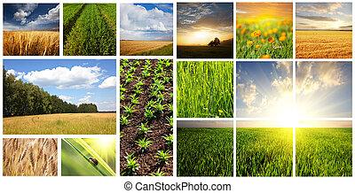 collage, campi