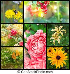 collage, estate